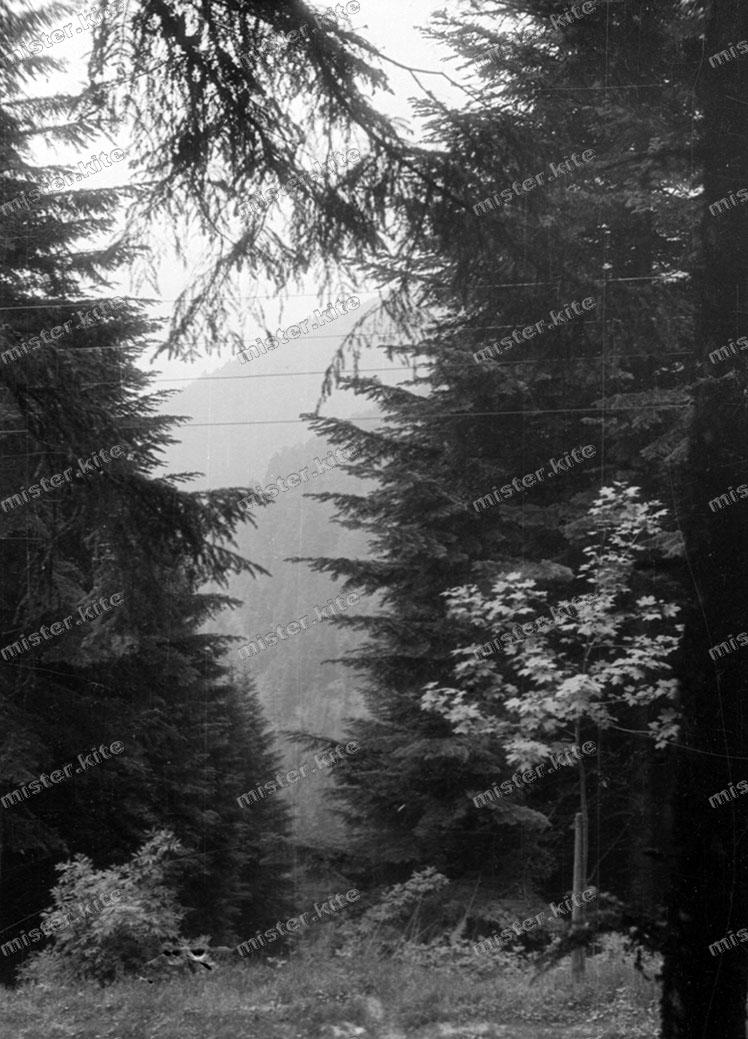 negativ 1930 natur landschaft schwarzwald baden w rttemberg 3 ebay. Black Bedroom Furniture Sets. Home Design Ideas